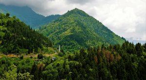 Türkiye Ormanları Gaz Salınımının Yüzde 16'sını Tutuyor